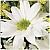 الصورة الرمزية لـ الورده البيضاء