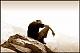 الصورة الرمزية لـ درع بني زيد