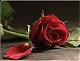 الصورة الرمزية لـ زهرة الحبق
